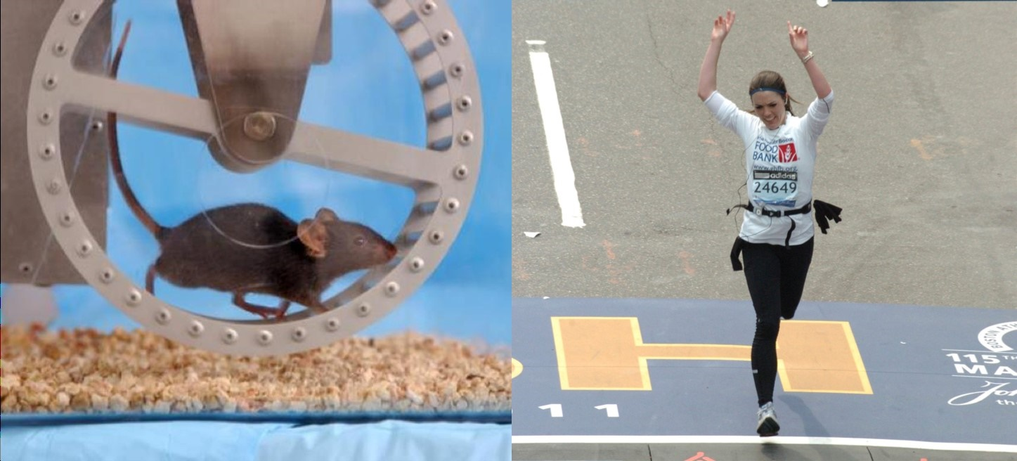 Caption: What is the relationship between the central neurochemical changes following acute exercise that have mainly been described in rodents and the behavioral changes seen after acute exercise that have mainly been described in humans? Credit: Henriette van Praag (photo on left); MarathonFoto (photo on right).