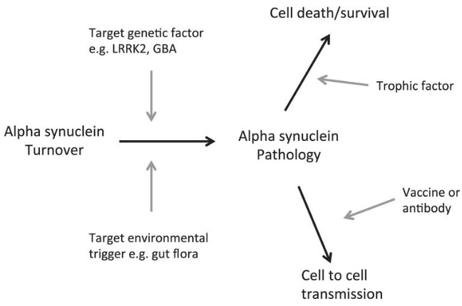 Parkinsons Disease Progression >> The Search For The Holy Grail Promising Strategies For Slowing